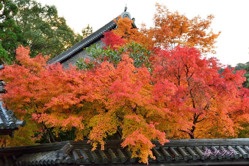 京都5(8)変更済