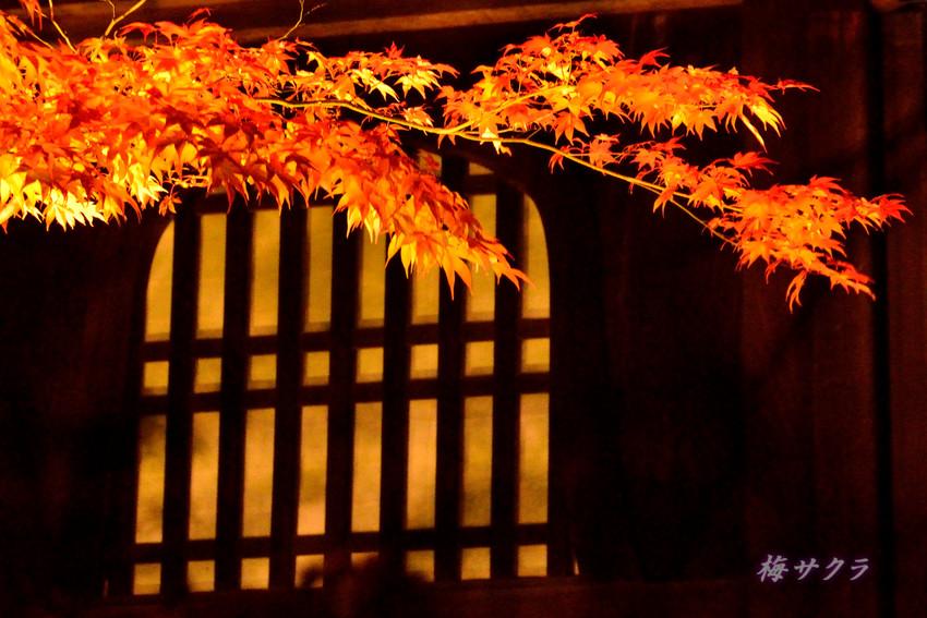 京都6(4)変更済