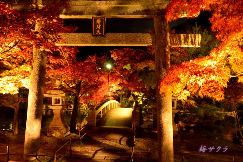 京都6(8)変更済