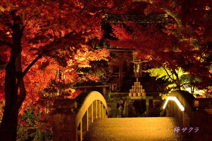 京都6(9)変更済