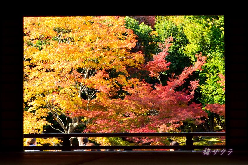 京都7(3)変更済