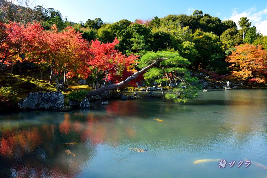 京都7(4)変更済