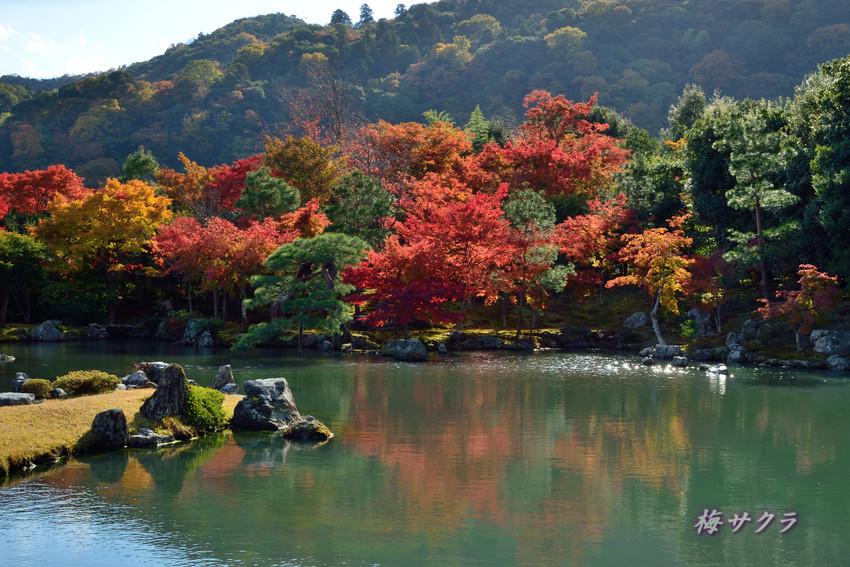 京都7(11)変更済
