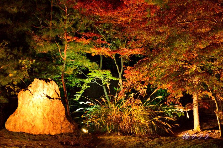 京都9(2)変更済