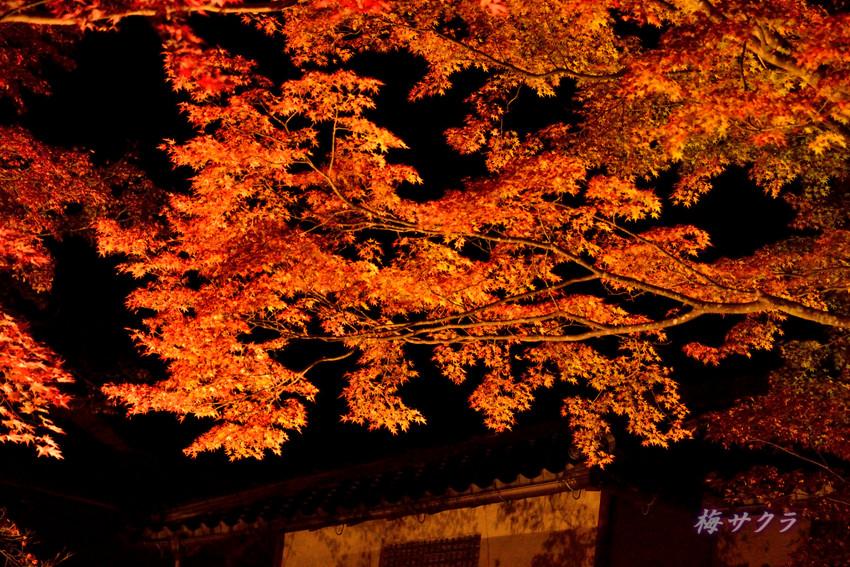京都9(11)変更済