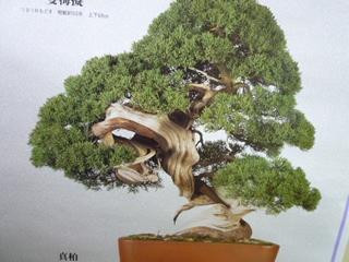 syougatu007.jpg