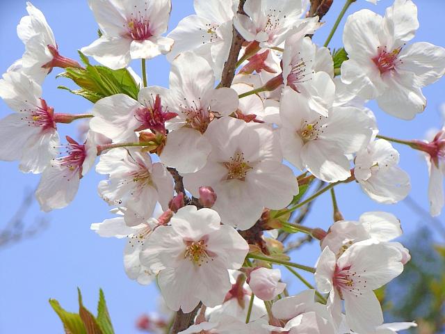2007-Spring039.jpg