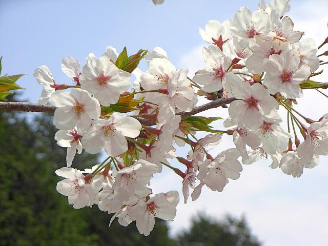 2007-Spring040.jpg