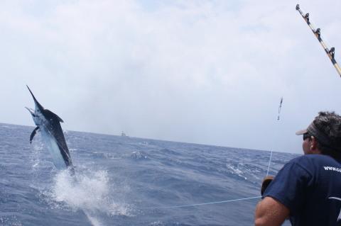 2011年 マーリンフィッシング 釣行メンバー募集