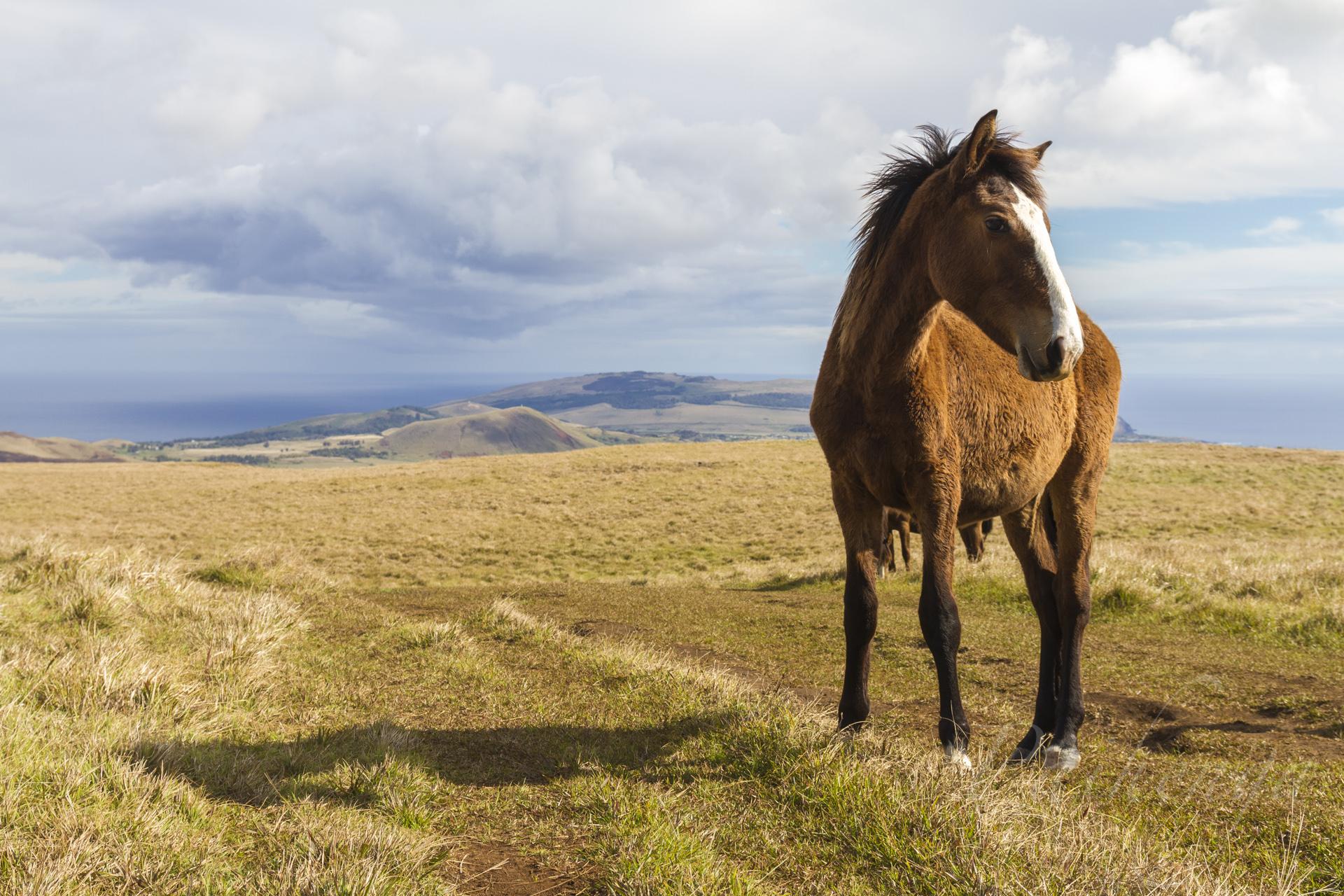 caballo91.jpg