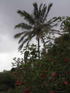 午前は曇り