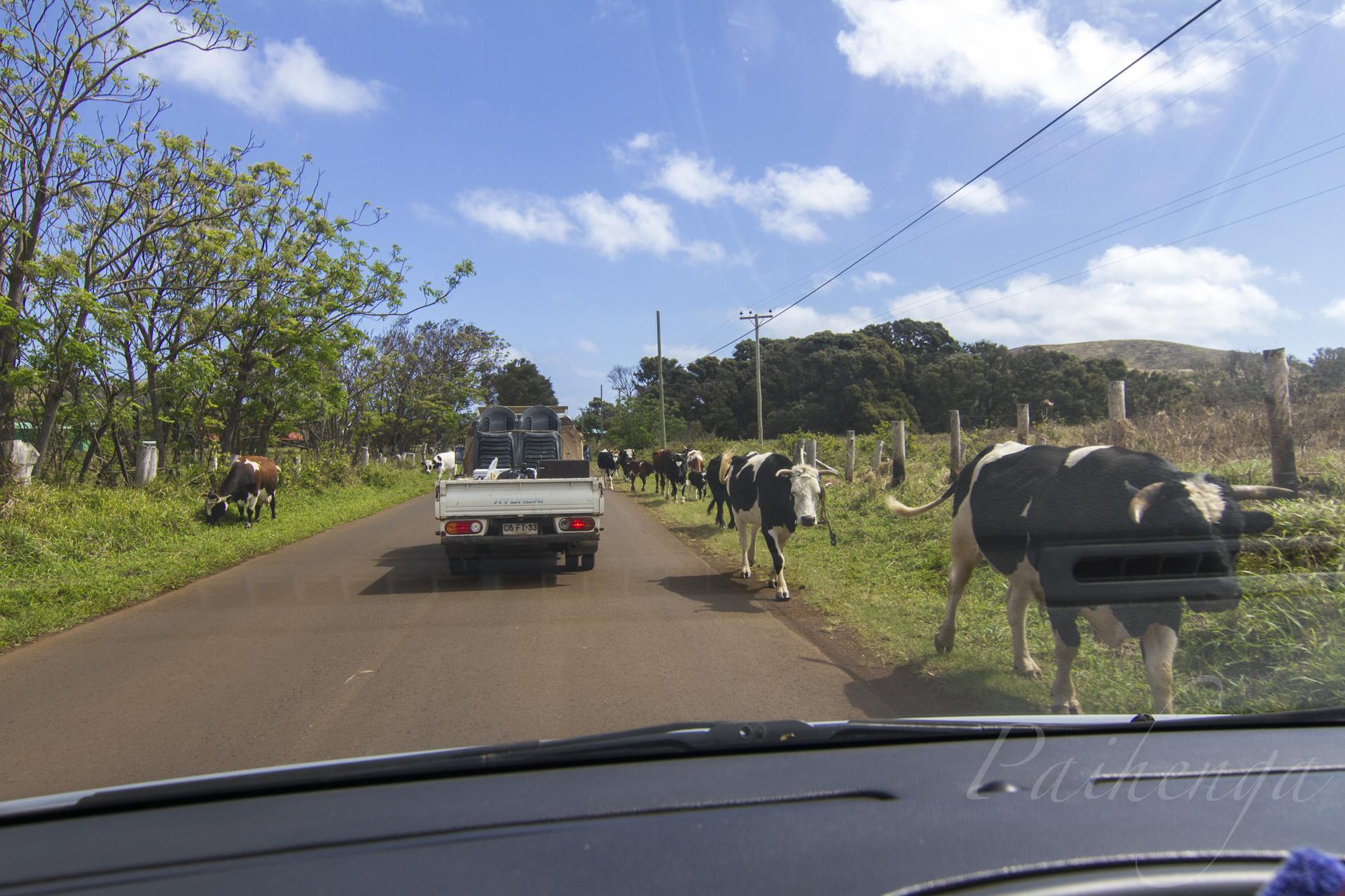 vaca17.jpg