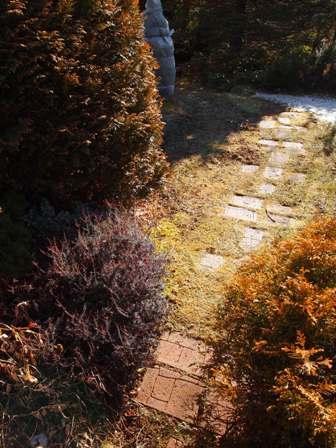 my-garden 089