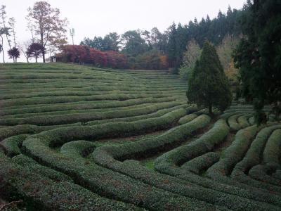 s-お茶経営士会2010-11-10 060