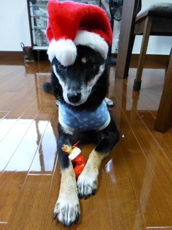 クリスマス帽子17