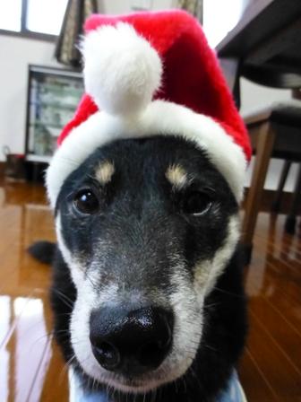 クリスマス帽子19