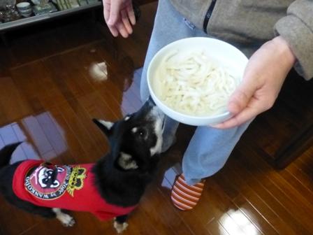 犬用讃岐うどん19