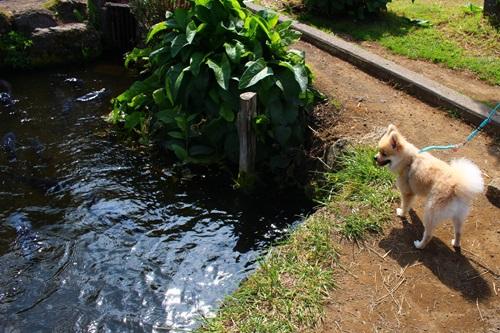 クウチャンと池