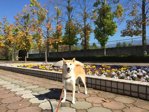 秋めいた公園で朝散歩
