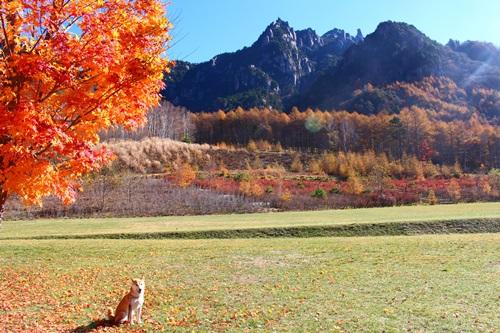 みずがき山自然公園から見る瑞牆山と紅葉