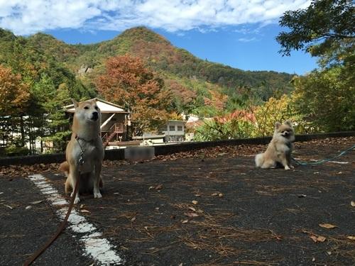 クウちゃんとお出かけ(昇仙峡・ドッグラン)