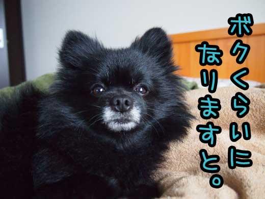 bokukuraininarimasuto.jpg
