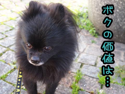 bokunokachiha.jpg