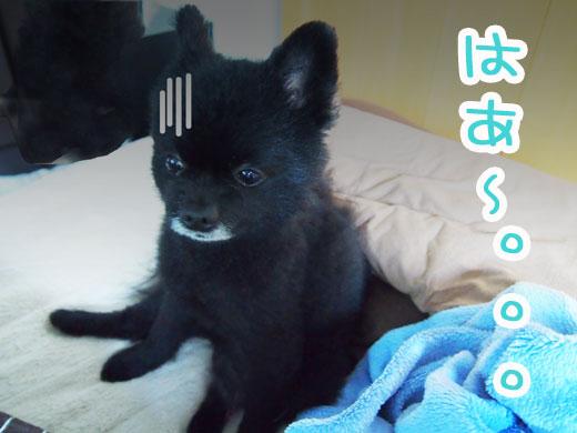 hamigakikirai_20120523232347.jpg