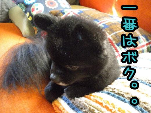 ichibannhaboku.jpg