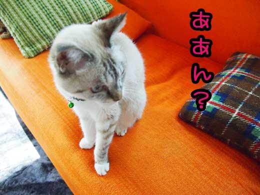 imanouchi.jpg