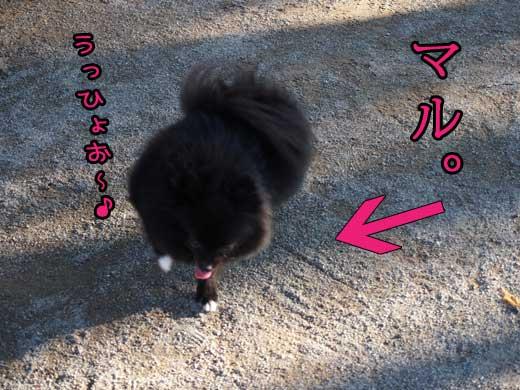 kochiramaru.jpg