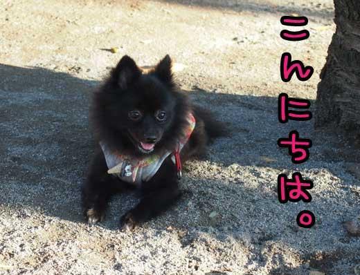 m_chan.jpg