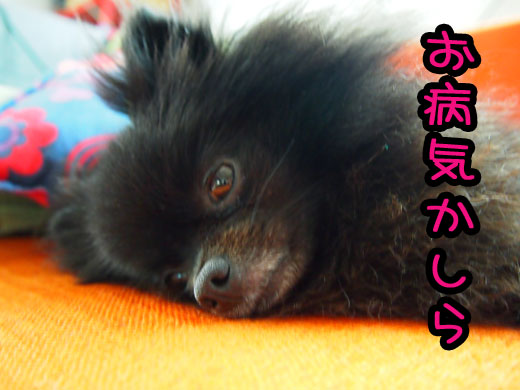 obyoukikasira.jpg
