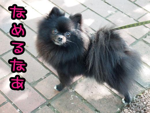 ooharikiri_20120506121258.jpg