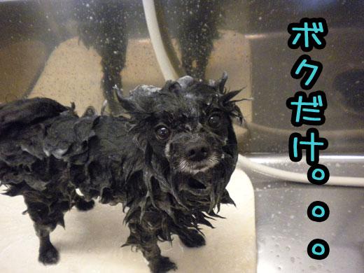 shampooing_20120102124449.jpg