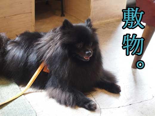 sikimono_20121016114829.jpg