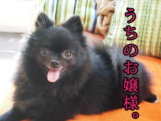 uchinoojosama.jpg
