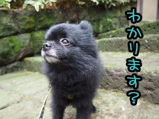 wakarimasu.jpg