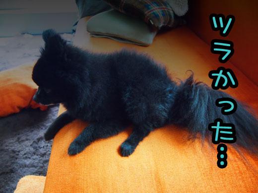 wasuretaidekigoto.jpg