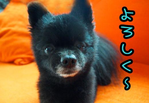 yorosikudesu_20120526115742.jpg