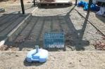 幼稚園、砂場清掃、掃除、作業前