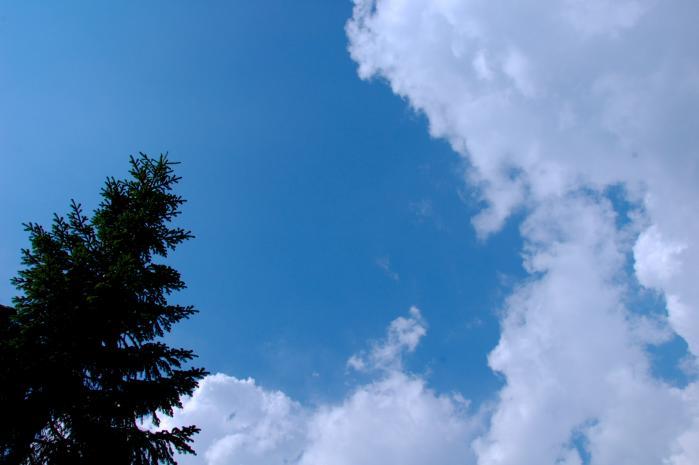 木と空と雲001