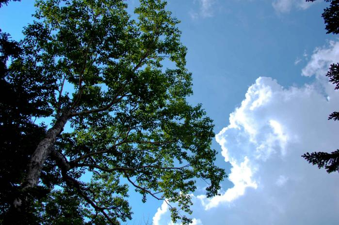 木と空と雲002