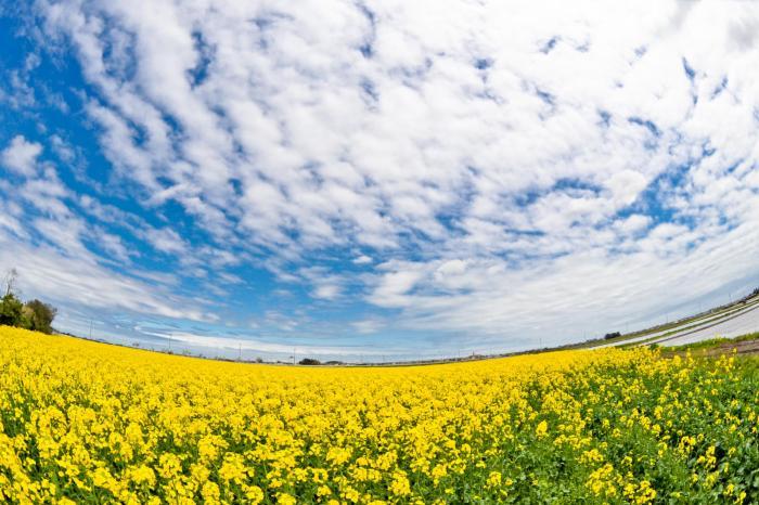 黄色い花の象徴