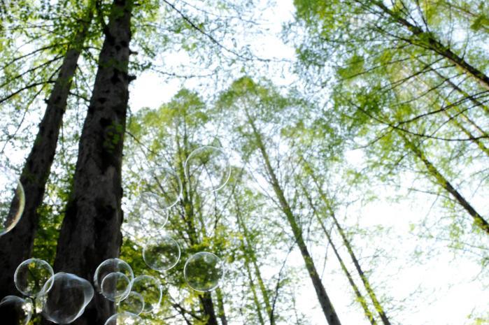 木々の中を涼しげに飛んでいくシャボン玉