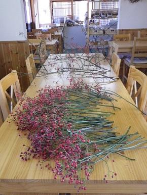 ローズヒップの収穫