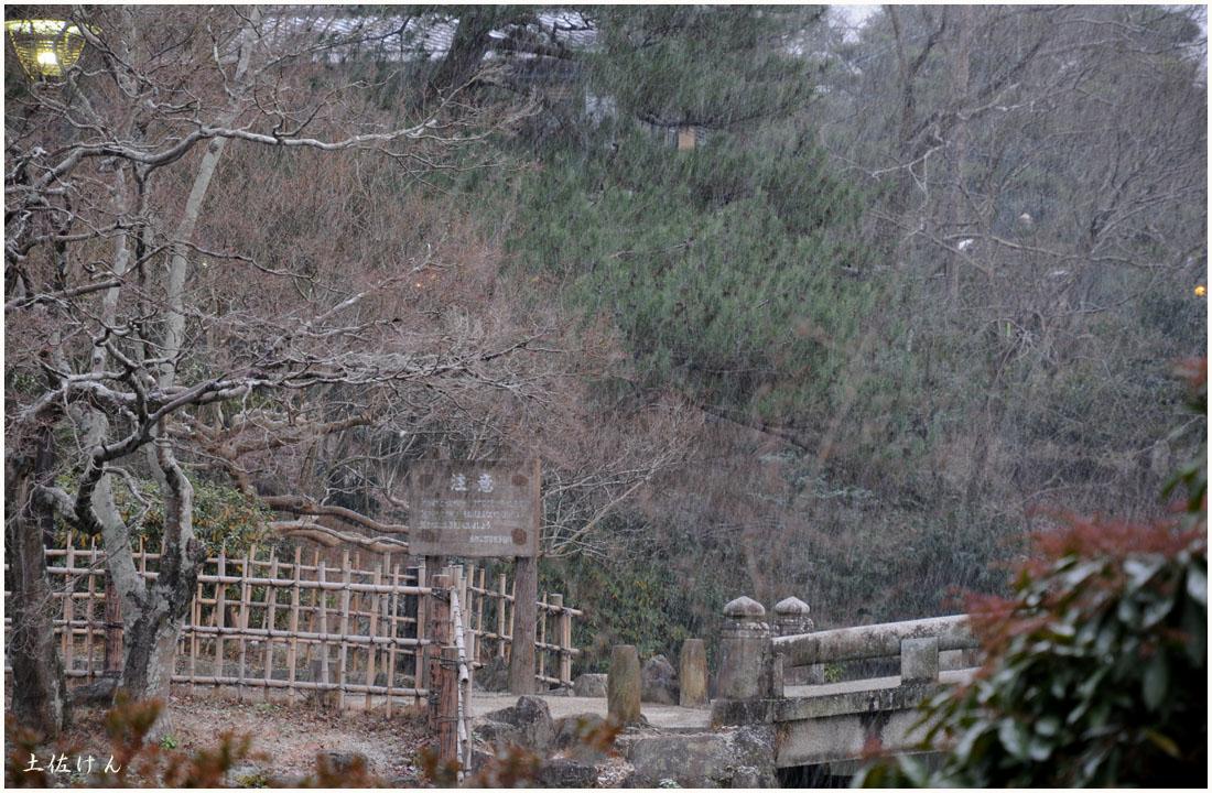 円山公園2