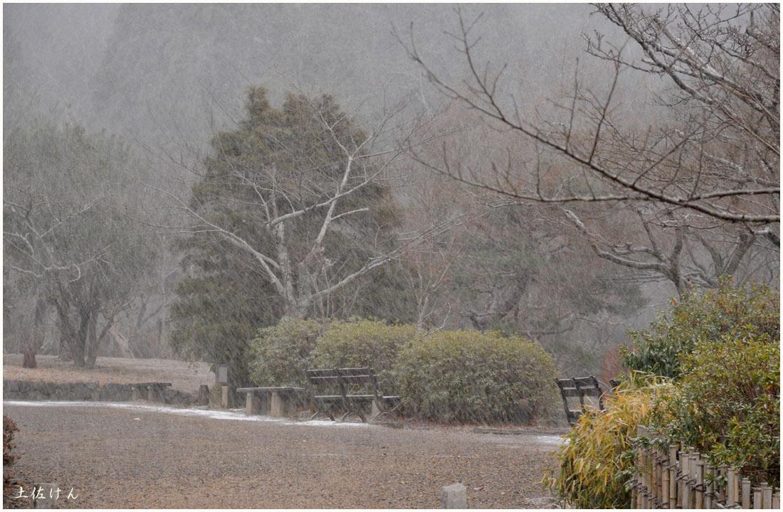円山公園1