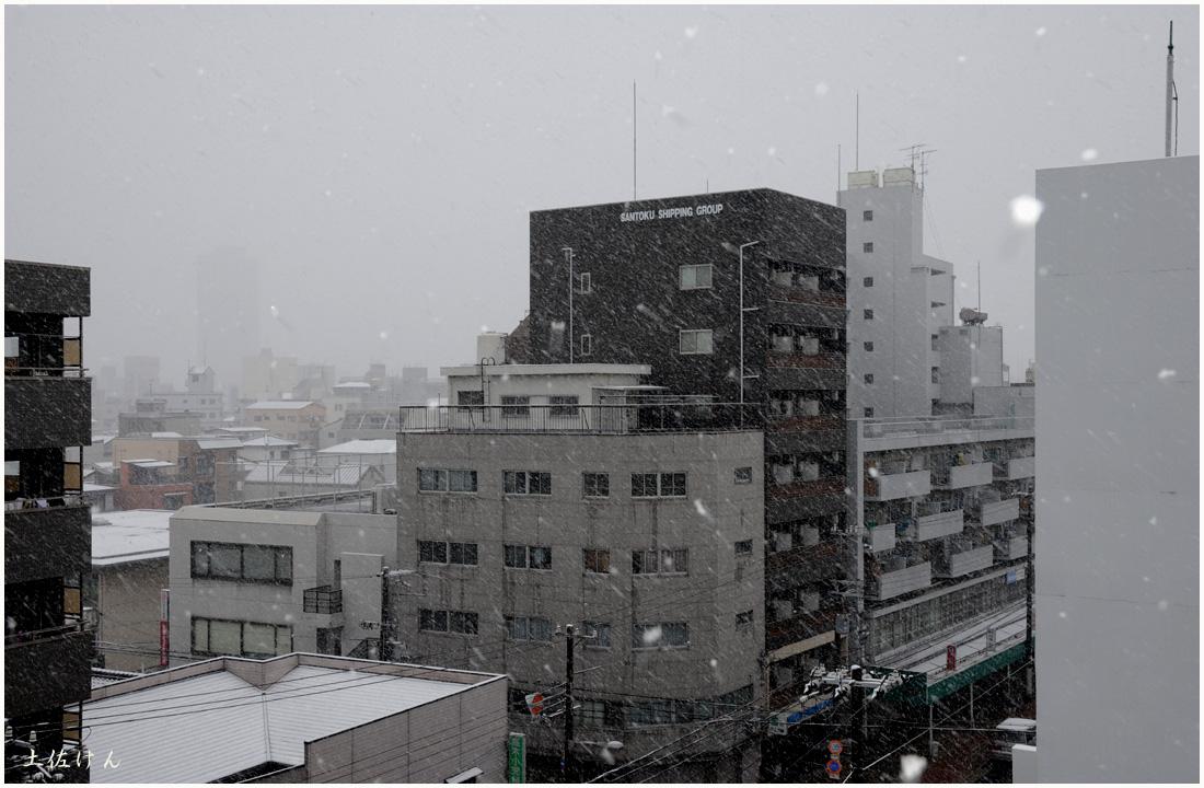 大阪の雪1
