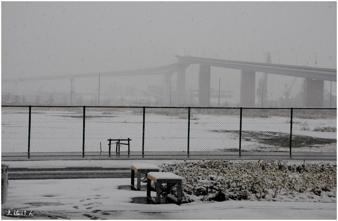 大阪の雪6